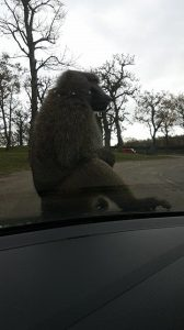 Knowsley Safari Park 5